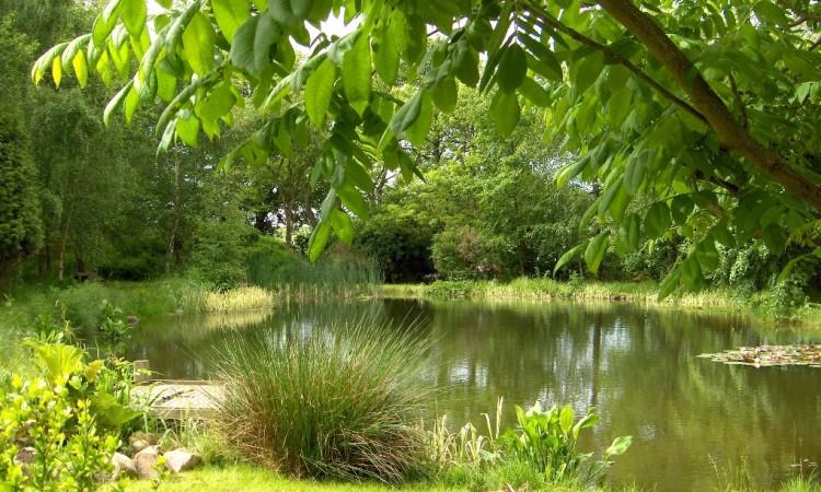 Privat trädgård Valnötsträd vid dammen