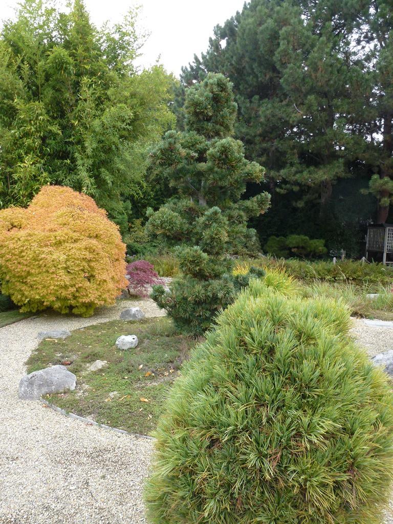 Kagran school garden (12)
