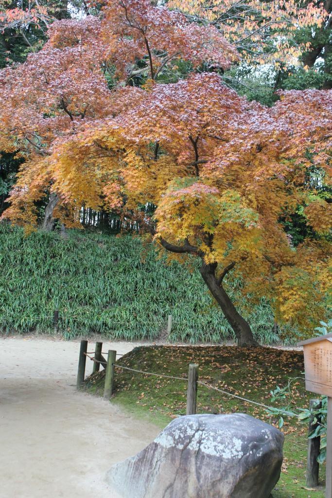 karakuen garden trädgårdsform (10)