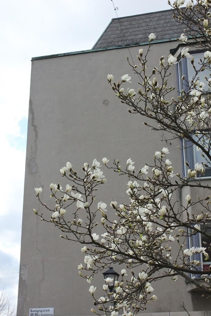 Magnolia Kobus på Kungsgatan