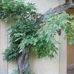Giardini Segreti (1)