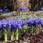 Trädgårdsform (1)