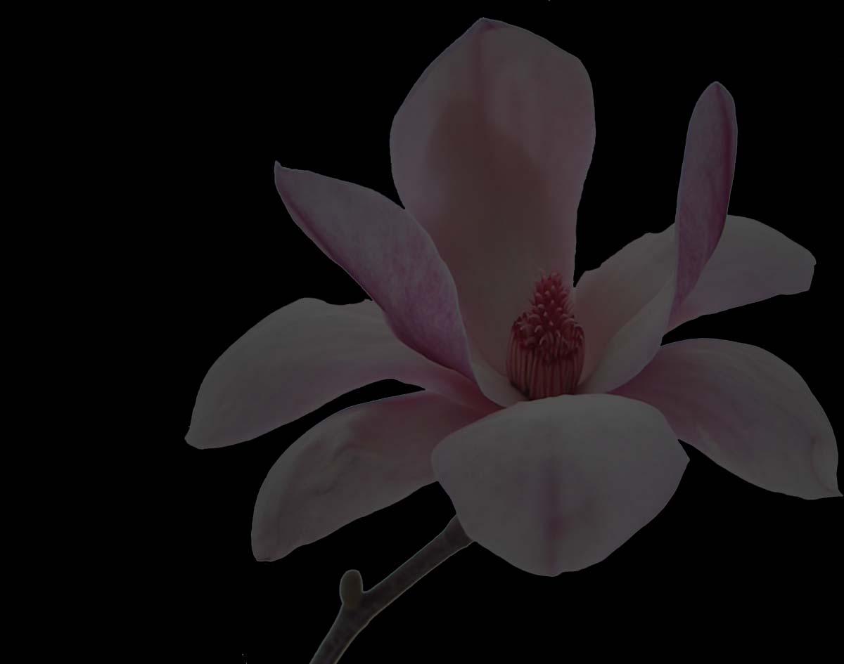 bg_blomma