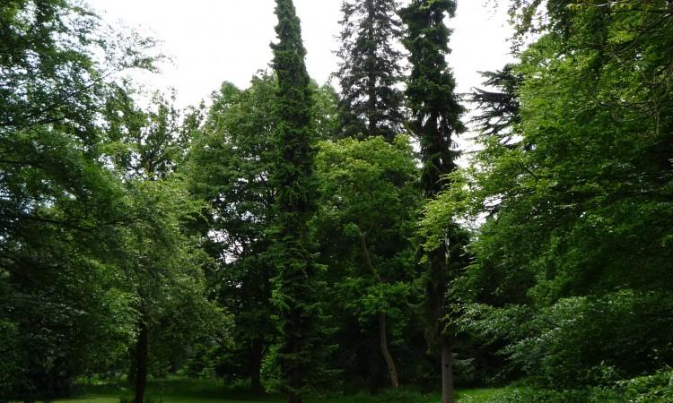 London Kew Garden